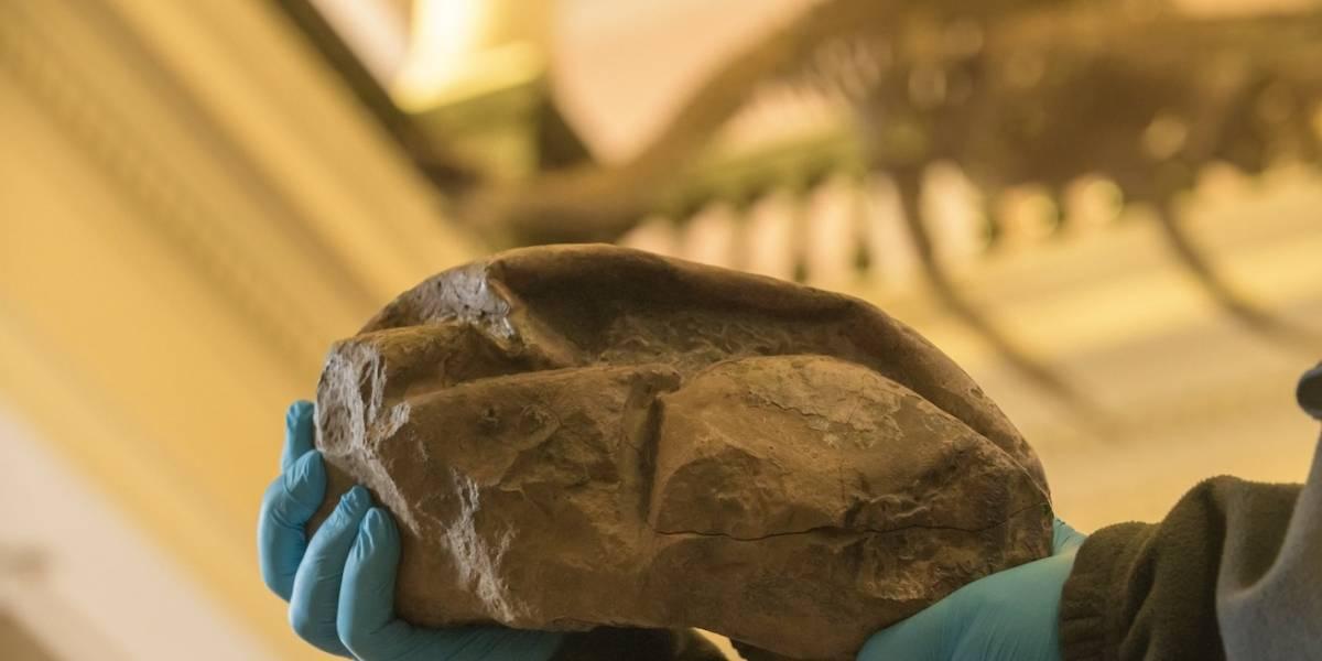 """""""Pensamos que era un estómago"""": así es el huevo más grande de la era de los dinosaurios descubierto por científicos de la U. de Chile"""