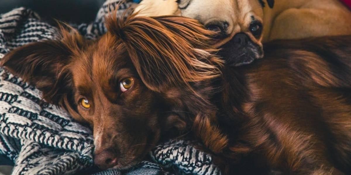 Estudio: Alimentar perros y gatos con comida cruda, casera o vegana podría ser peligroso