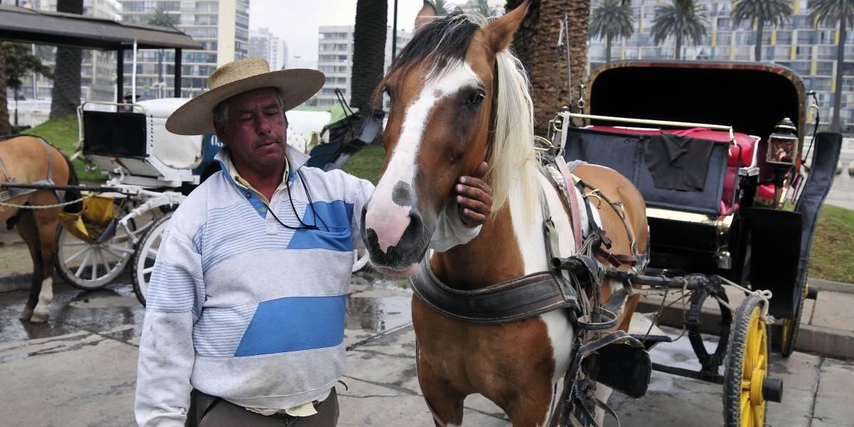 """¡El caballo está a salvo! Cocheros de las """"victorias"""" desmienten que alguno de los animales haya sido vendido a una carnicería"""