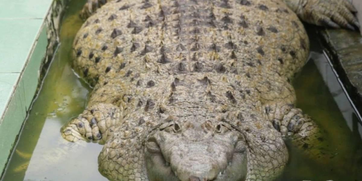 Mujer salió de paseo pero terminó devorada por un cocodrilo de seis metros