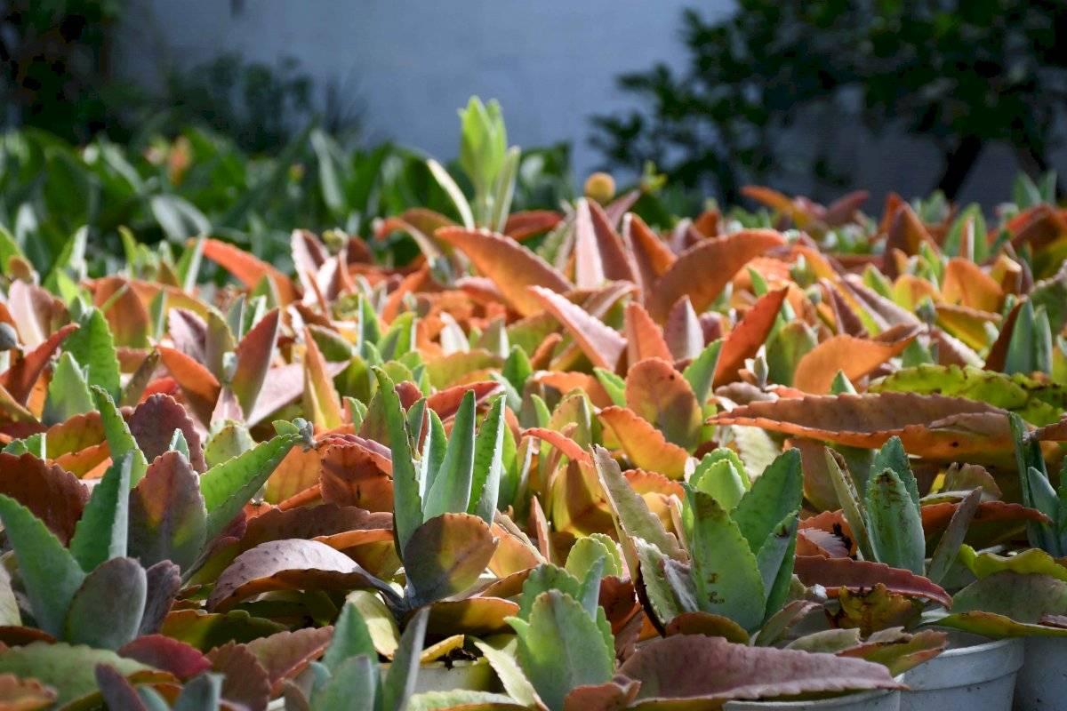 plantas-ecuador