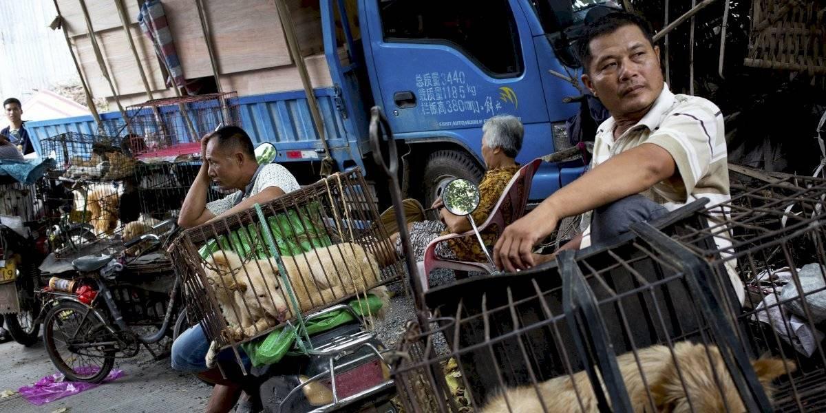 No quieren parar: siguen comiendo perros en China pese a prohibición tras coronavirus