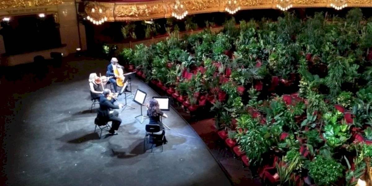 Más de 2.200 plantas fueron el público de concierto en Teatro Liceu de Barcelona