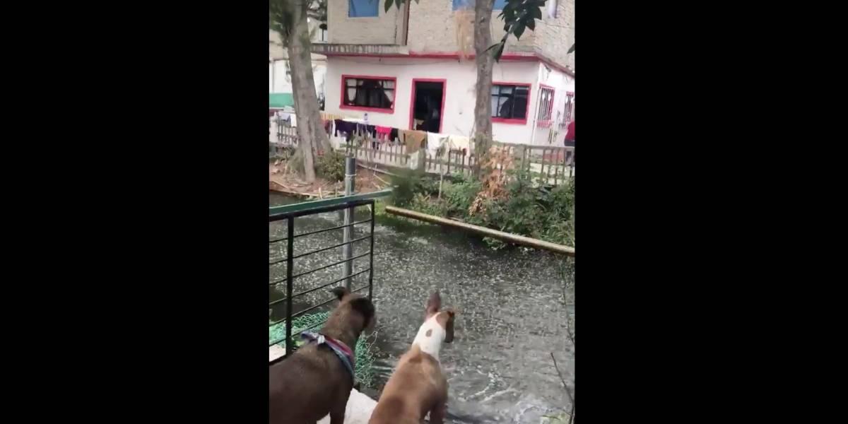 Insólito fenómeno: video muestra a peces saltando en medio del terremoto de México