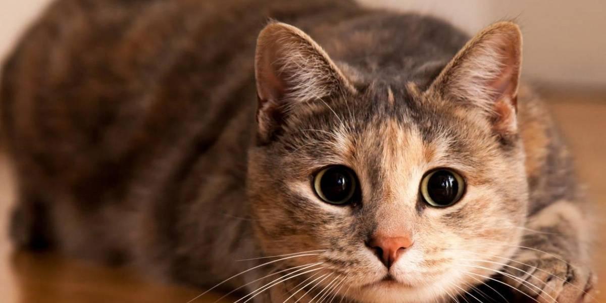 5 animales que pueden predecir desastres naturales