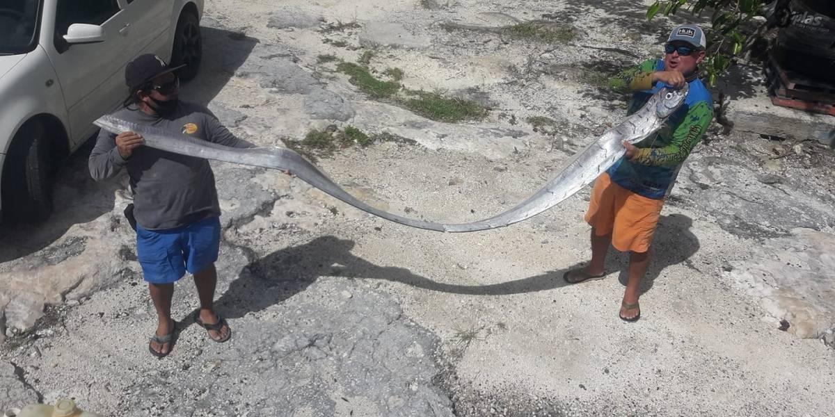 ¿Se cumplió la profecía del pez remo por el terremoto en México?