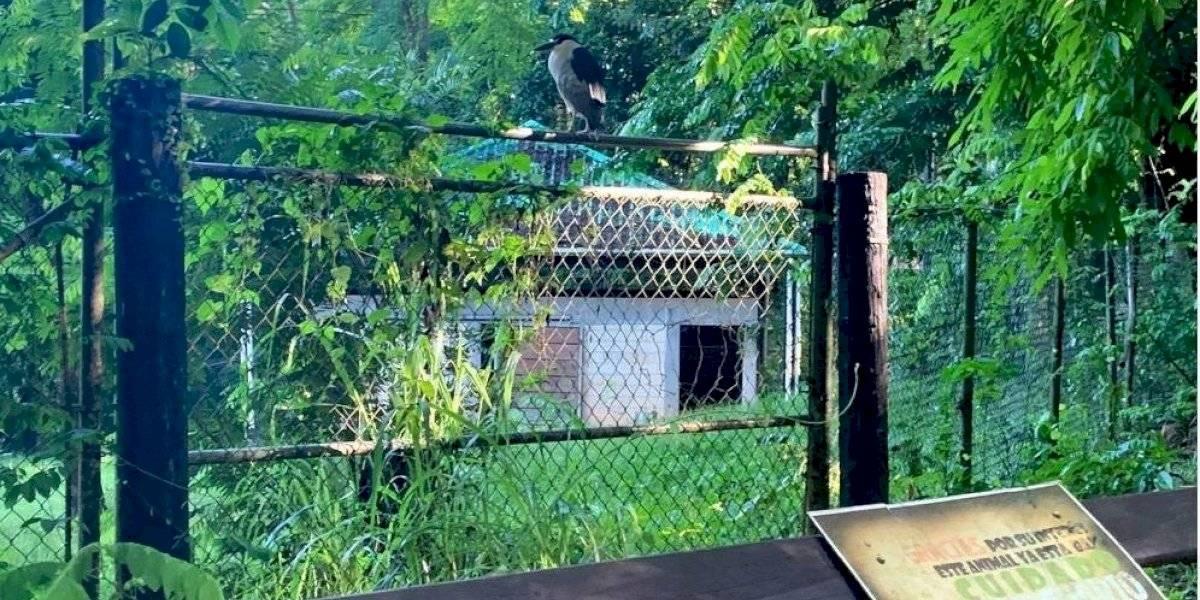 Muestran presunta nueva evidencia del avanzado deterioro del zoológico de Mayagüez