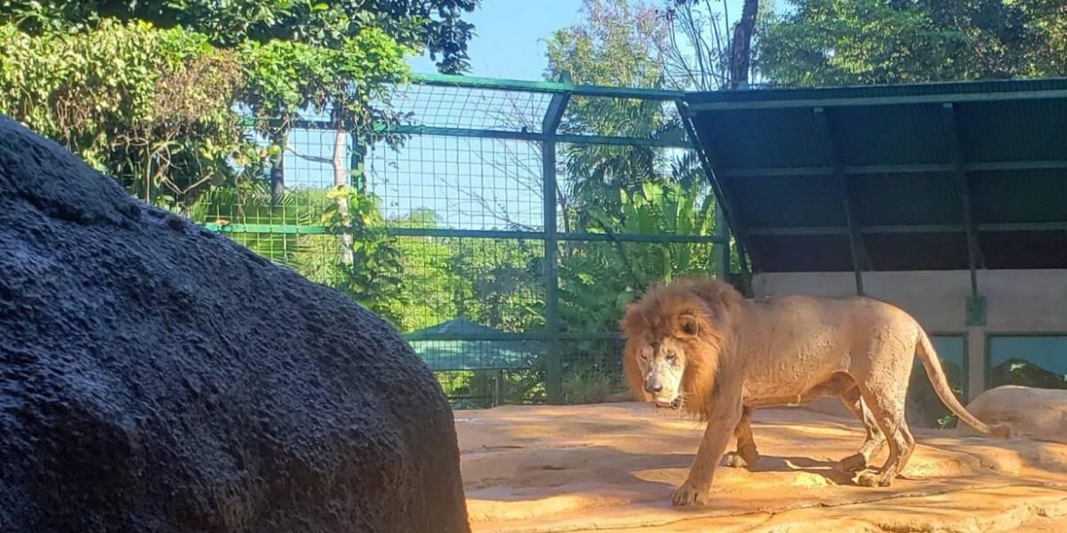 León ataca trabajadora de zoológico en Alemania