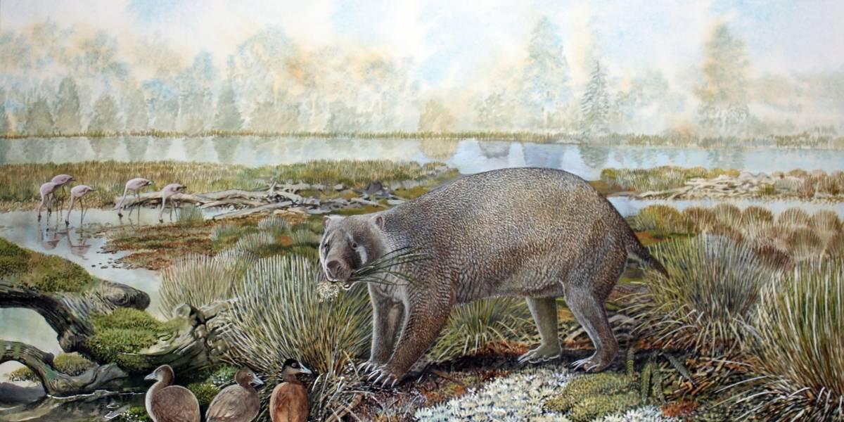 Ciencia.-Descubierta una nueva familia extinta de marsupiales gigantes en el desierto australiano