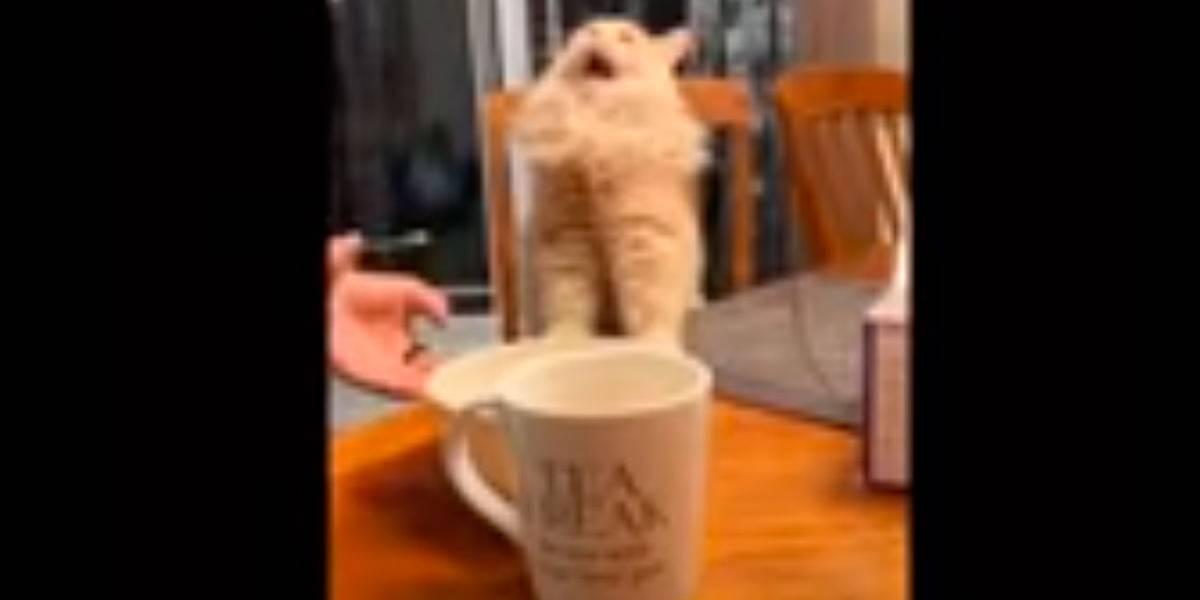 Vídeo mostra reação de gato ao provar sorvete pela primeira vez