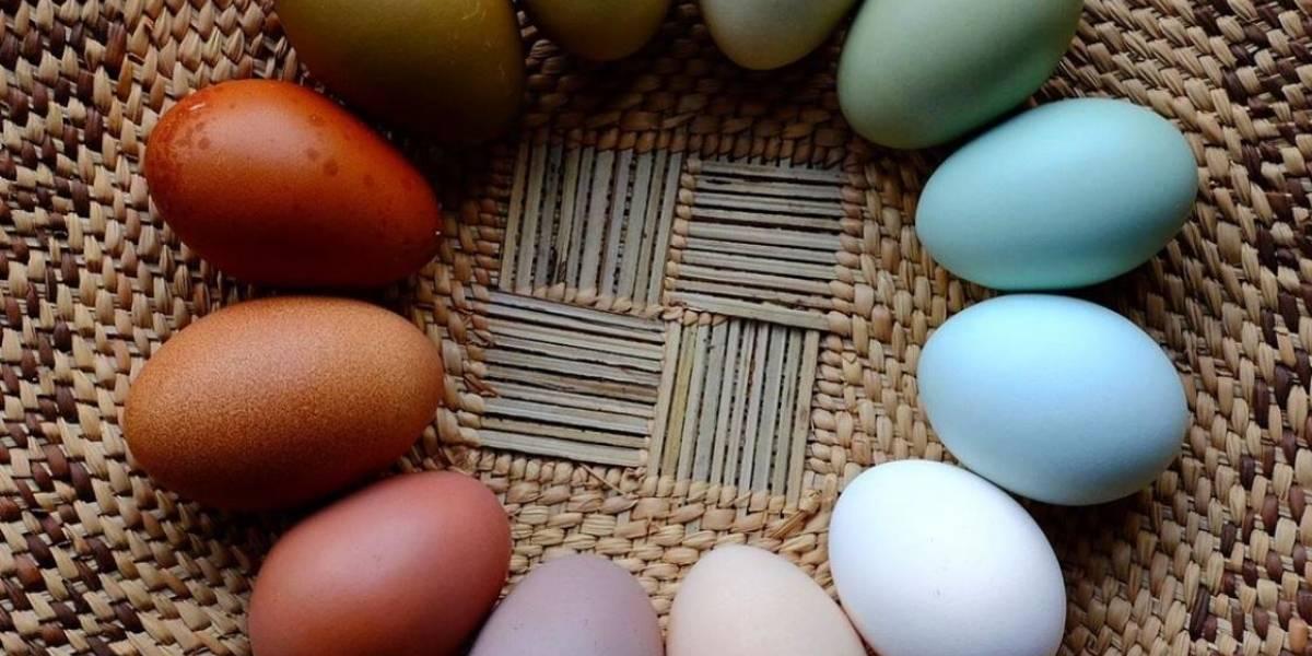 Ciencia: ¿qué significan los distintos colores en las cáscaras de huevos de gallina?