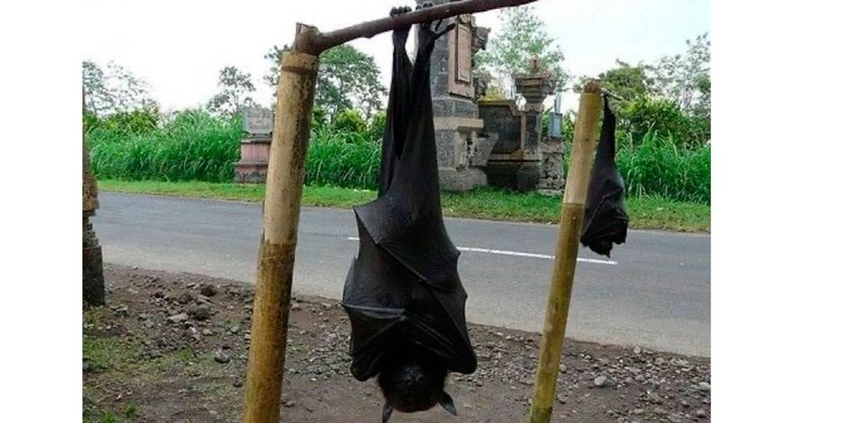 Foto de morcego gigante viraliza nas redes: tem tamanho de um homem