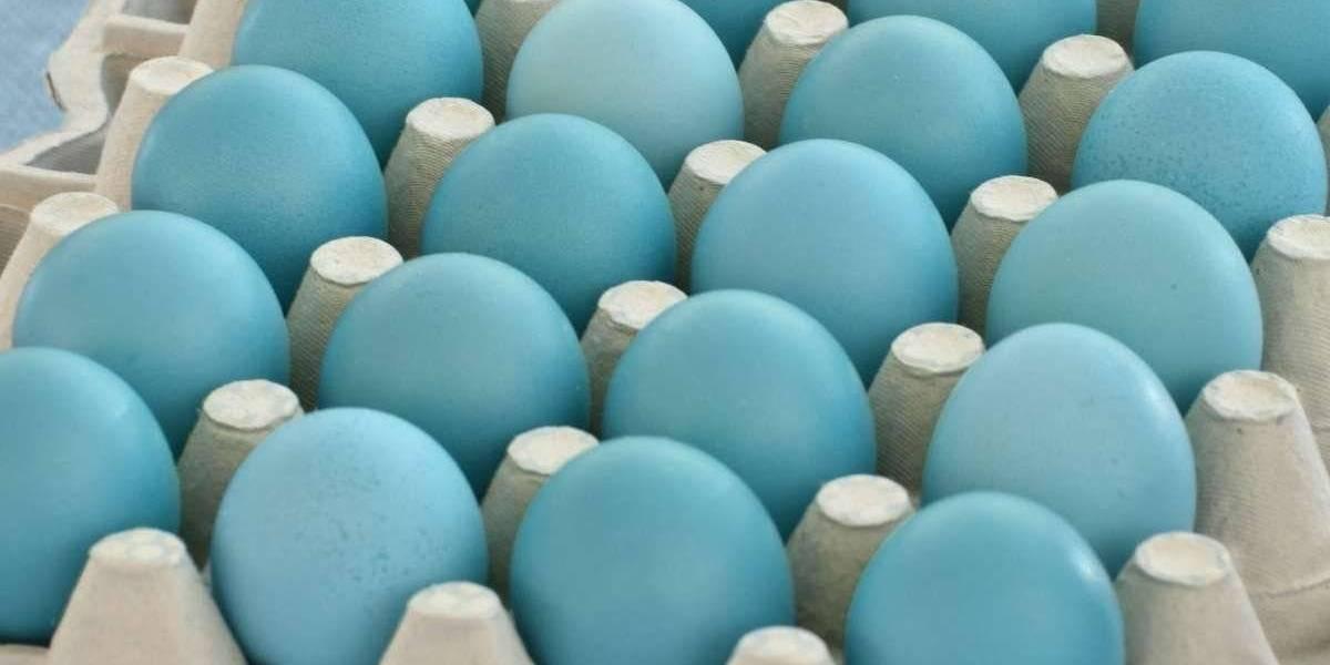 ¿Qué son y por qué se habla de los huevos azules?