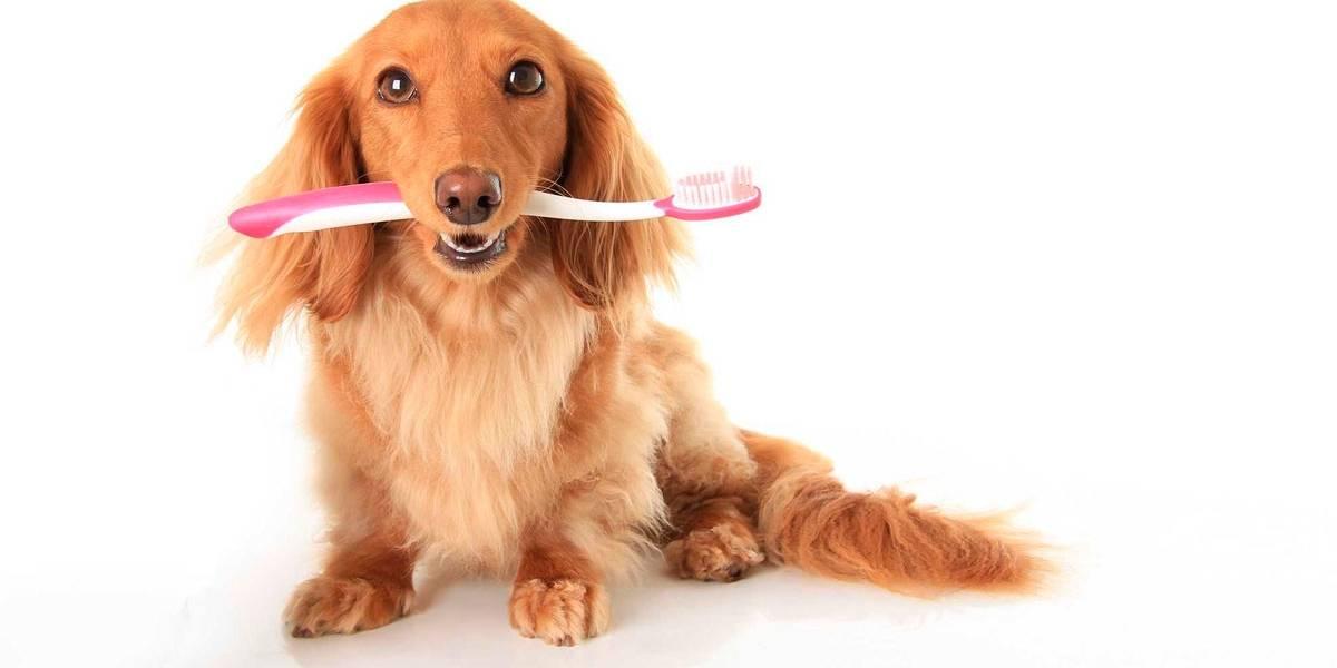 5 dicas para cuidar da higiene bucal de seu cachorro