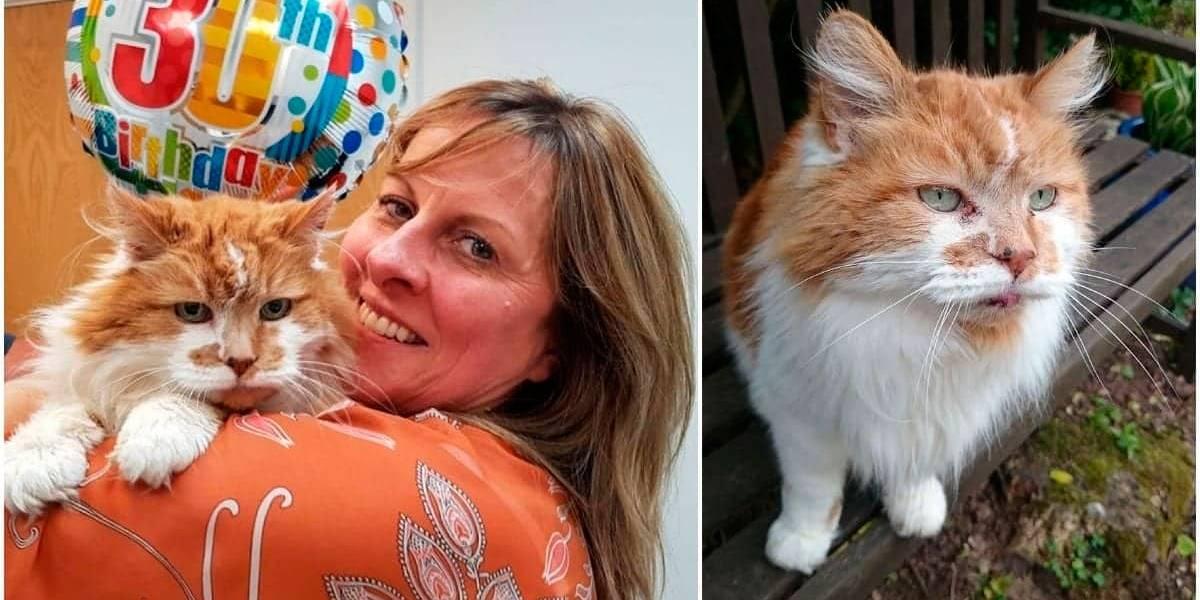 Morre, na Inglaterra, o gato mais velho do mundo