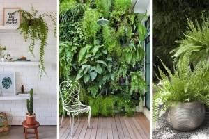 Samambaia: como cuidar e usar na decoração de sua casa