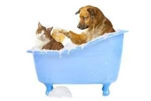 8 produtos para fazer a higiene do seu pet em casa