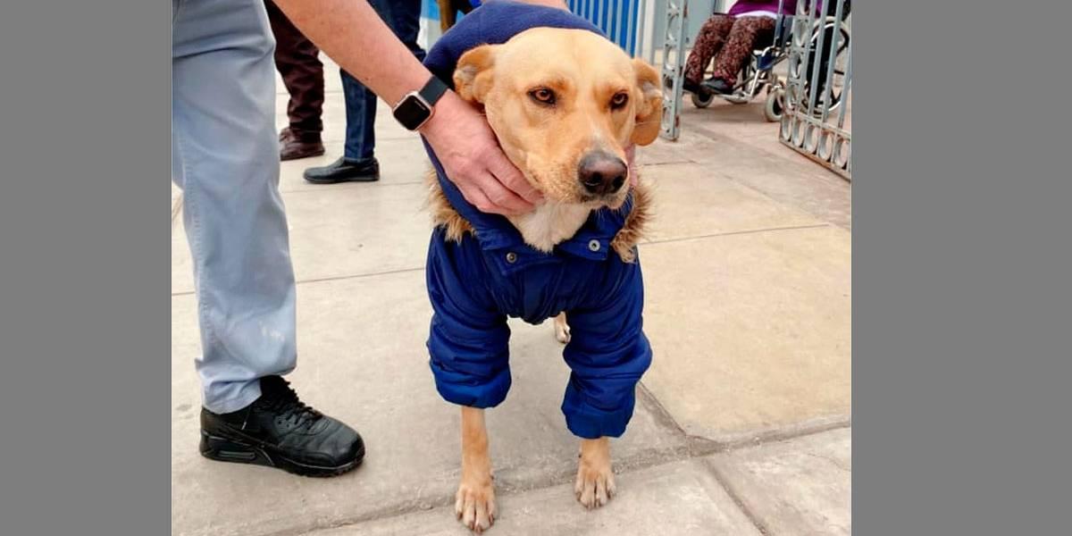 Cachorro espera em frente ao hospital por dono internado com covid-19