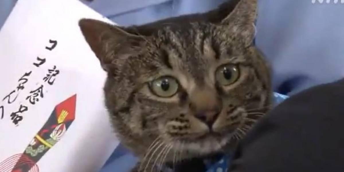 Gato e vizinhos fofoqueiros salvam a vida de idoso