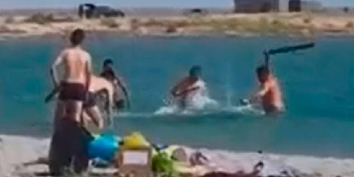 Turistas espancam foca até ela desmaiar para crianças fazerem selfies