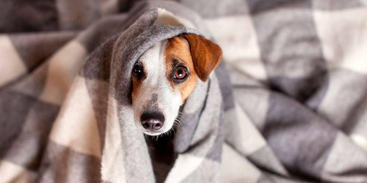 3 dicas para ajudar seu cão no inverno
