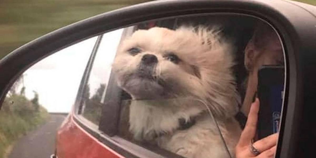 Dona de cão com doença incurável cria 'lista de desejos' para o animal
