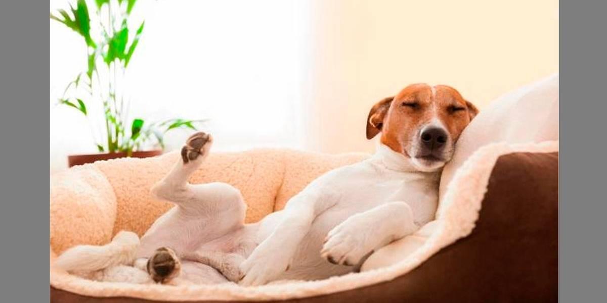 Cães também sonham?