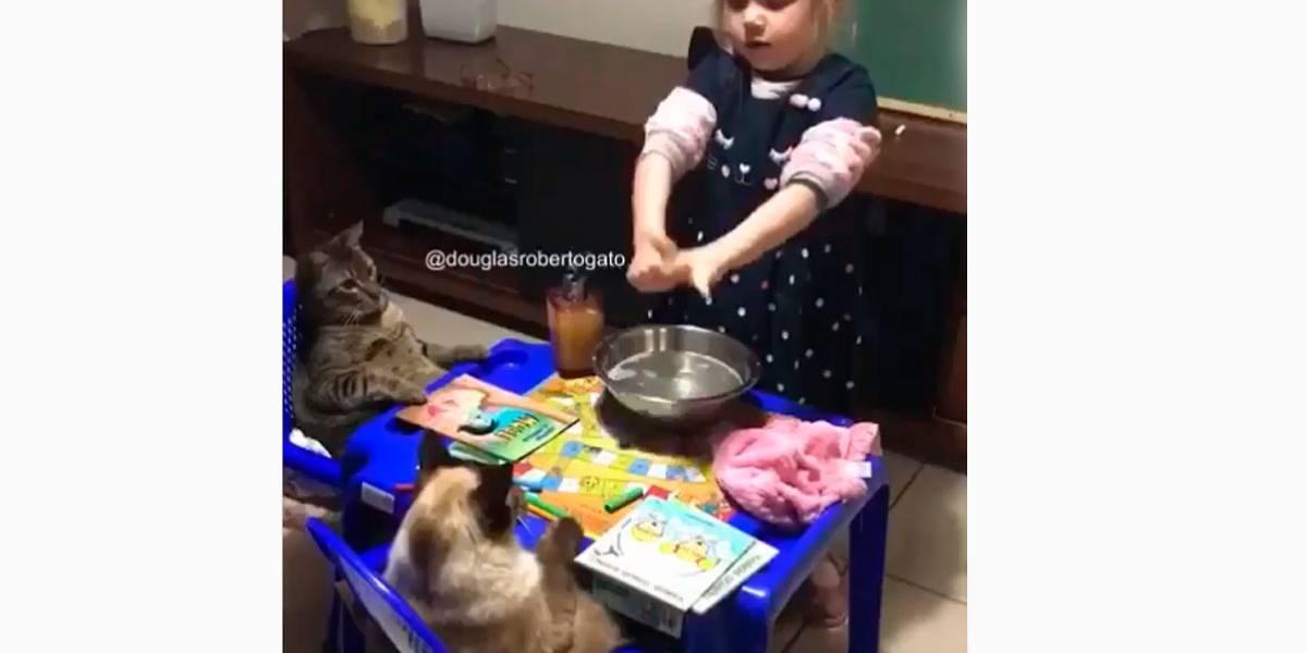 Vídeo: Menina de 4 anos ensina gatos a lavarem as mãos para não pegarem 'colonavílus'