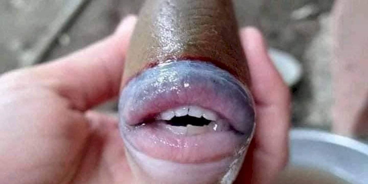 """Capturan un pez con """"sonrisa humana"""" y hace estallar las redes sociales"""