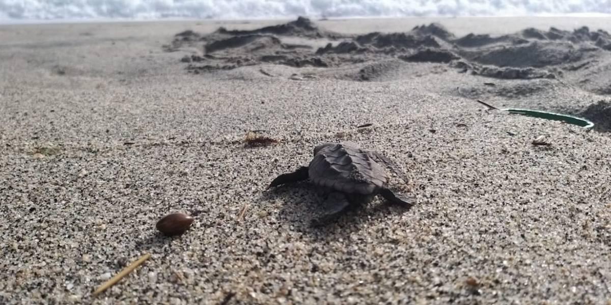 ¡Qué horror! Más de 1000 tortugas fueron arrojadas a un caño de aguas profundas