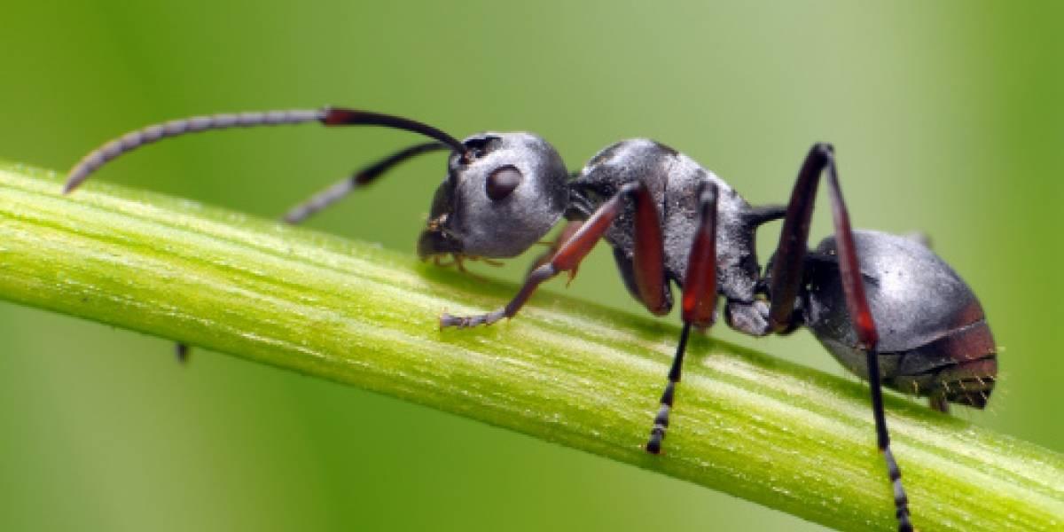 """Enjambres de hormigas voladoras """"invadieron"""" Reino Unido"""