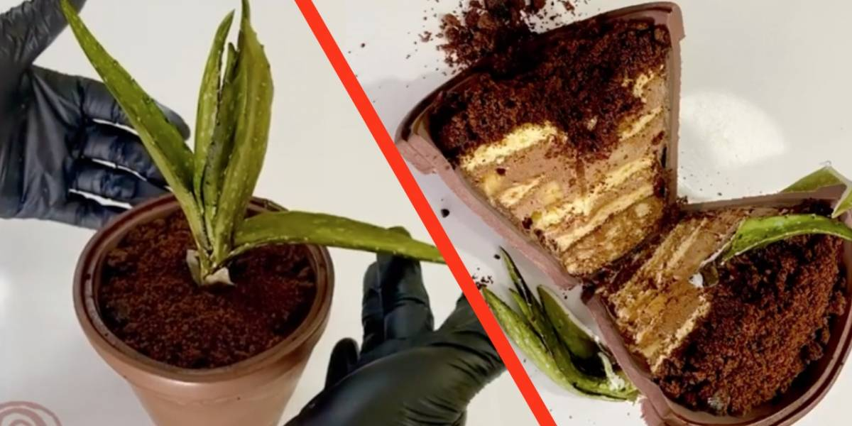 Everything is cake: este es el origen del meme de los pasteles