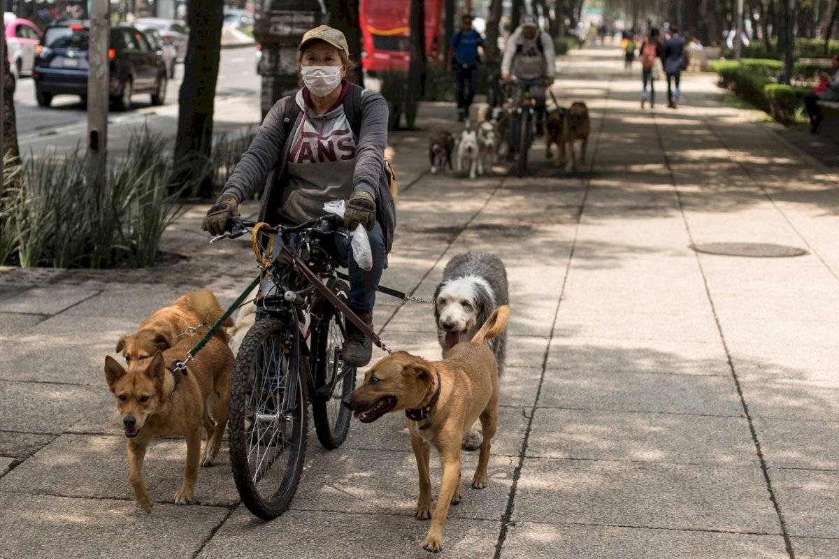 Paseo de mascotas en la CDMX.