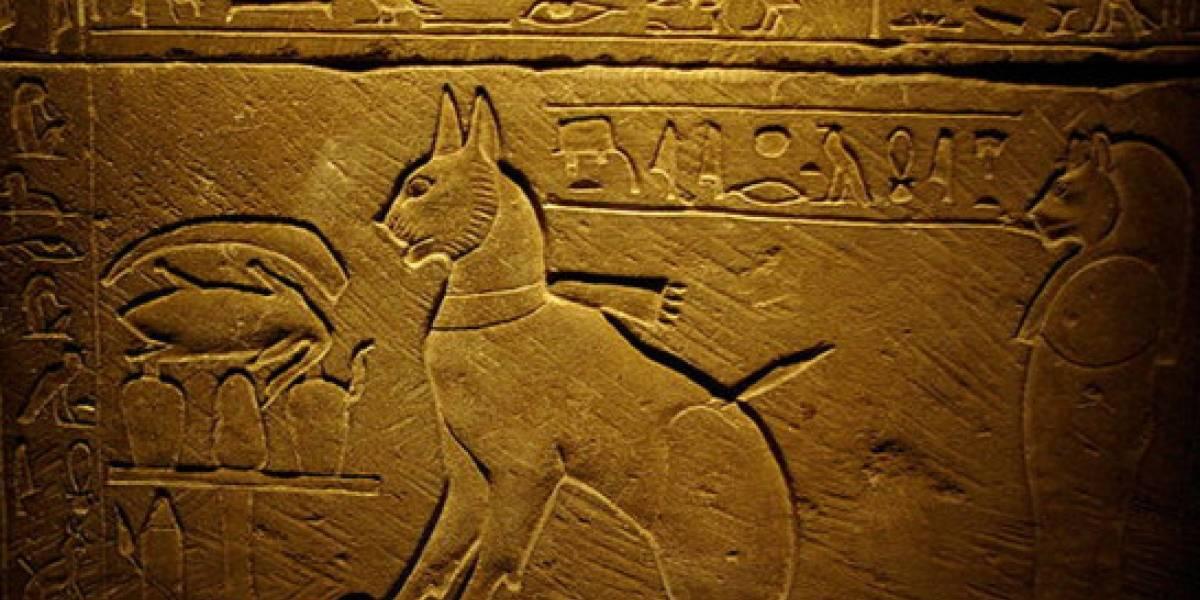 Investigadores hallaron restos de gatos en Polonia con data de hace 6.200 años