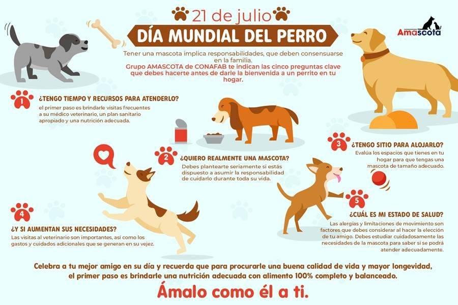 Consejos para ser un mejor dueño de perro