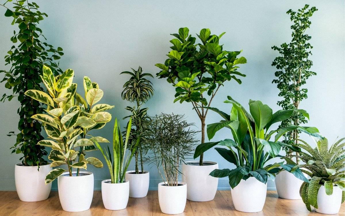 Tienes muchas opciones de plantas para escoger y darle más vida a tu salón de estar