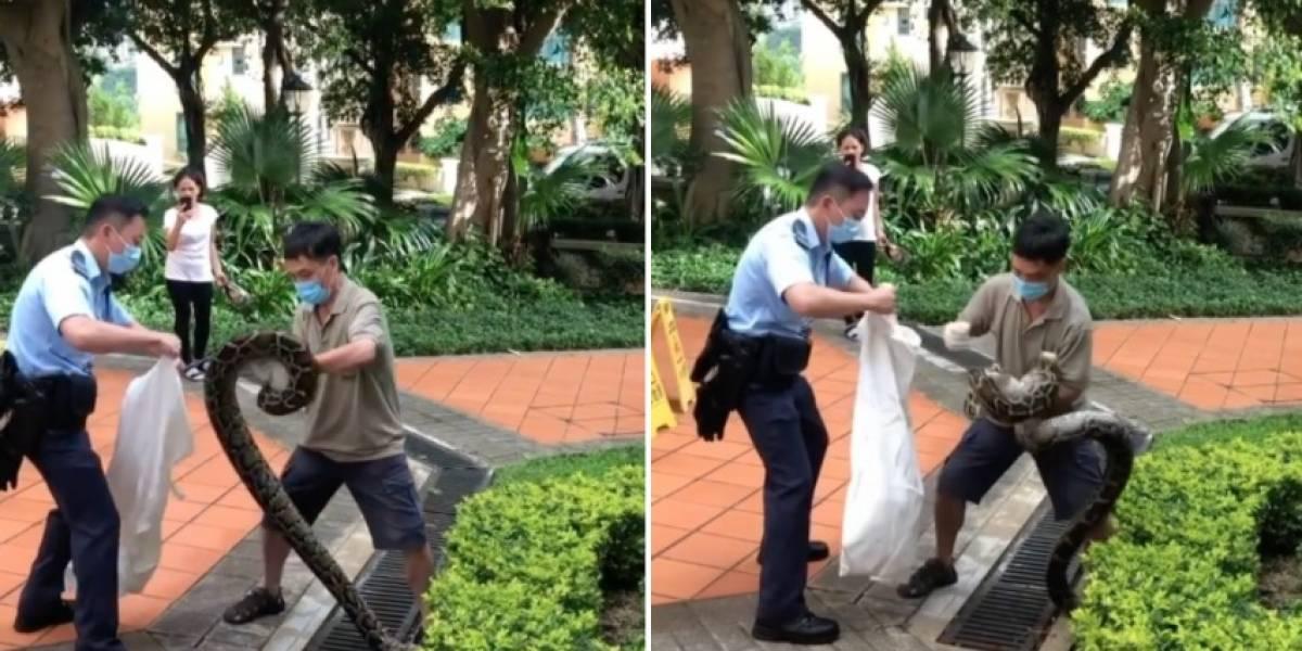 Vídeo mostra força de píton para evitar captura; cobra estava escondida em jardim de condomínio