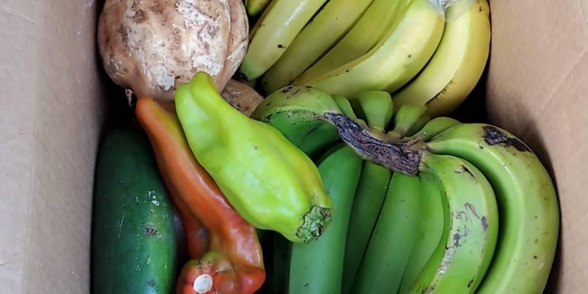 Municipio regalará 1,200 cajas de alimentos