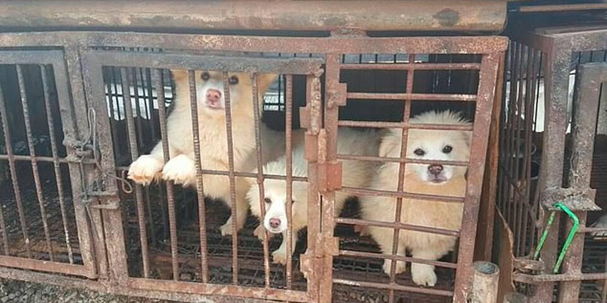 Fotos: grupo de defesa dos animais condena ritual de sopa de cachorro na Coréia do Sul