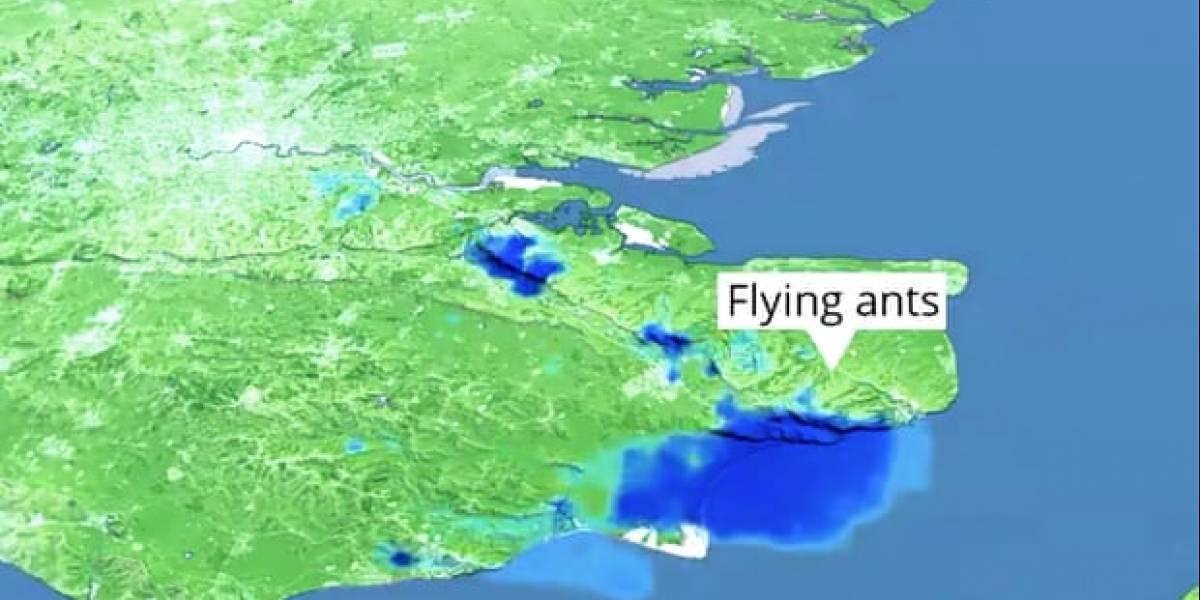 Nuvem de formigas voadoras passa pelo sudeste do Reino Unido