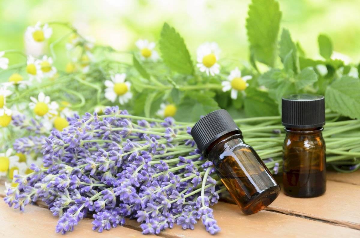 Los aceites esenciales también te ayudarán a sentirte cerca de la naturaleza