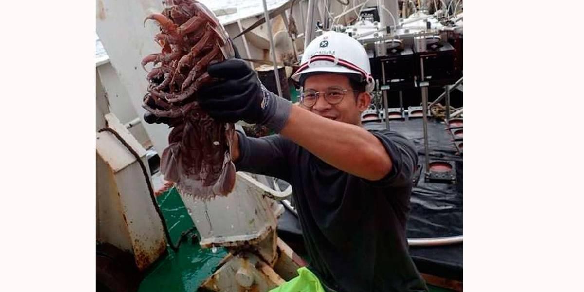 'Barata gigante' é descoberta no fundo do mar