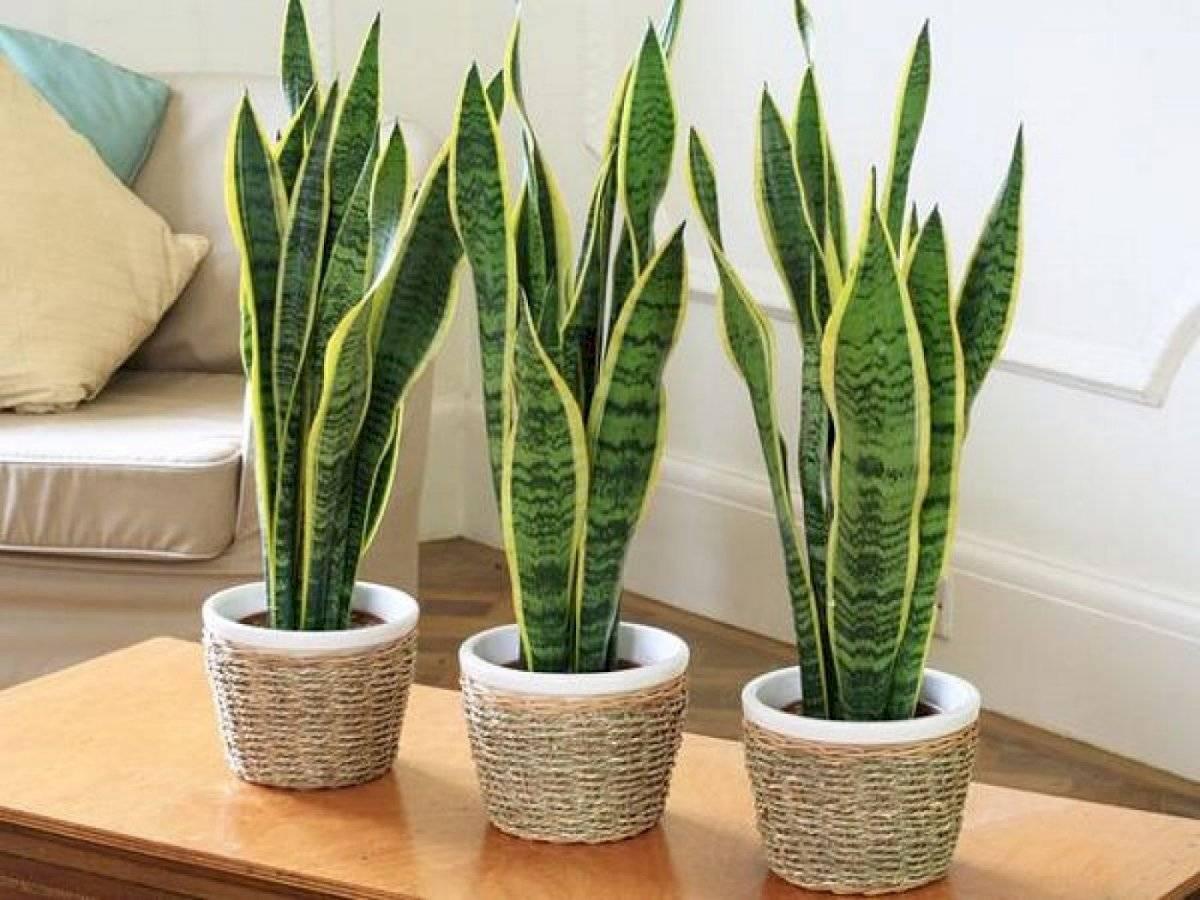 Incluir plantas en el interior del hogar es una excelente opción para conectarse con la naturaleza
