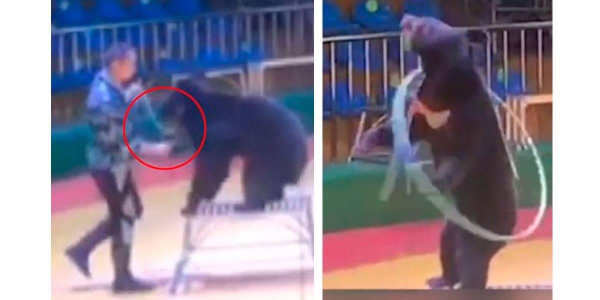 Treinador é flagrado espetando urso com agulha em circo