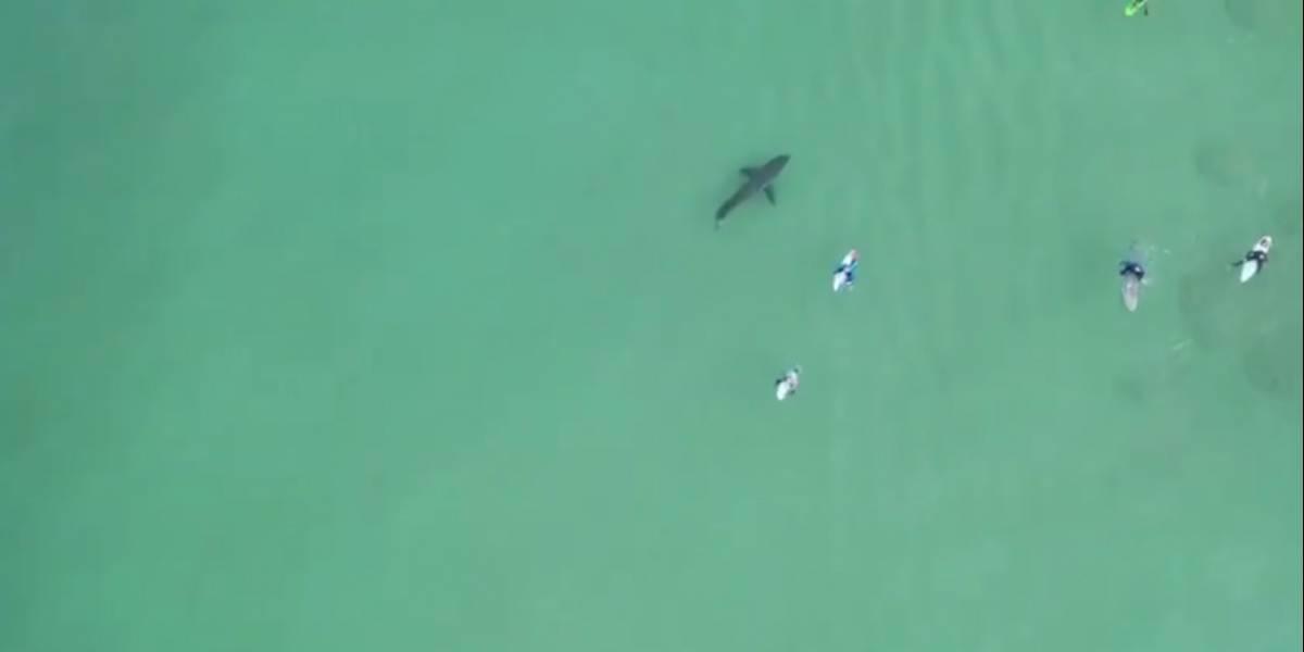 Vídeo impressionante mostra tubarão-branco nadando próximo de surfistas na Africa do Sul