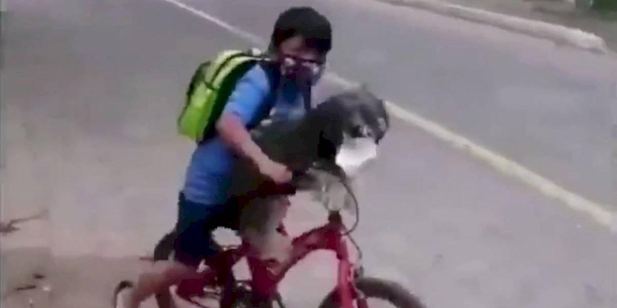 La ternura de los niños no tiene límites: video de pequeño que coloca mascarilla a su perro para salir a la calle