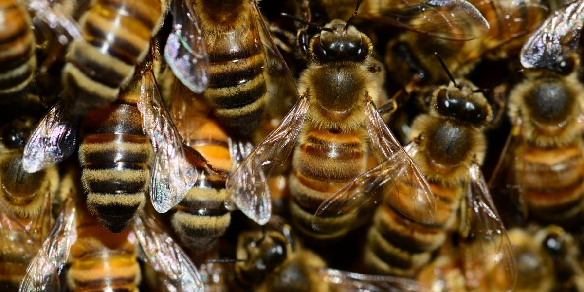 ¡Escalofriante! Enjambre de abejas invade playa de Nueva Jersey, Estados Unidos