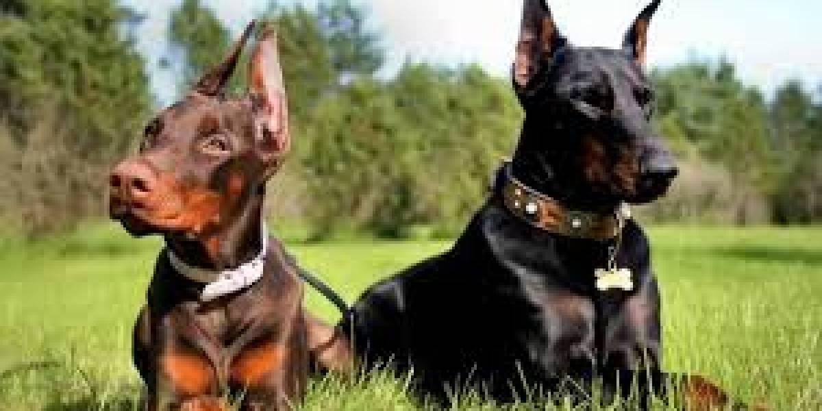 Tragedia en Mendoza: hombre murió atacado por sus propios perros