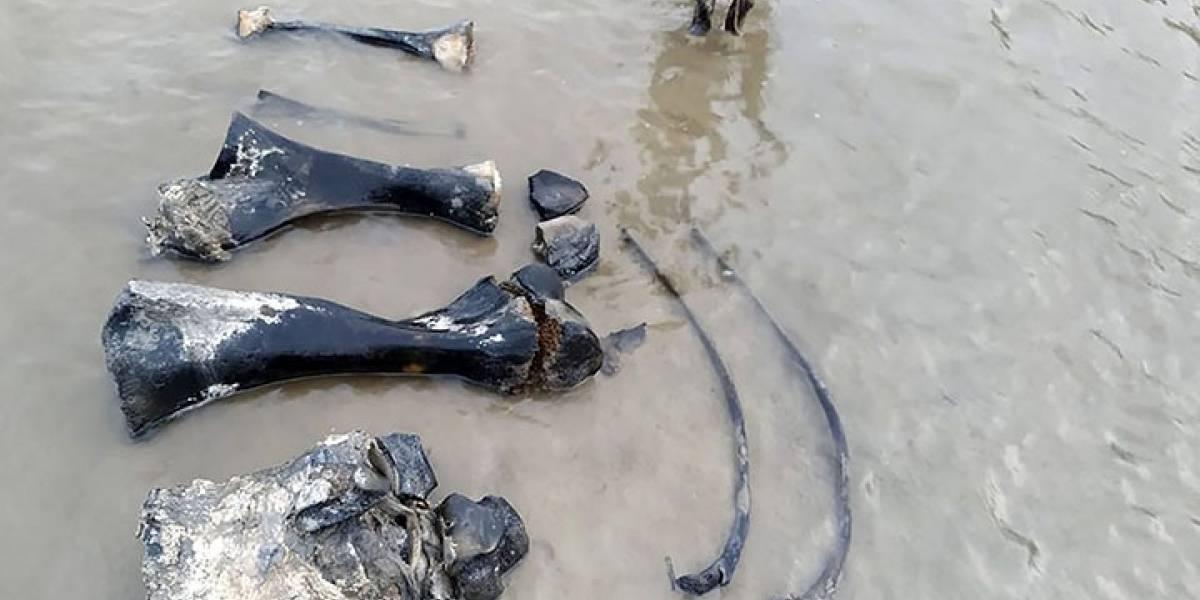 Hallan huesos y tejidos de mamut bien conservados en un lago del ártico ruso