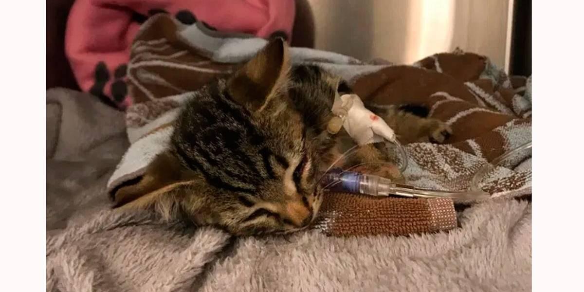 Filhote de gato é jogado pela janela de carro e deixado para morrer em estrada